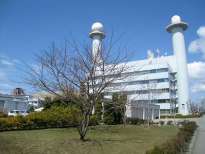 秋田地方気象台の構内にある桜の標本木です。