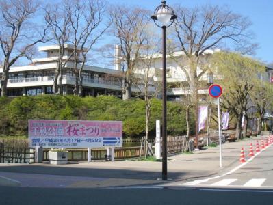 千秋公園桜まつり①