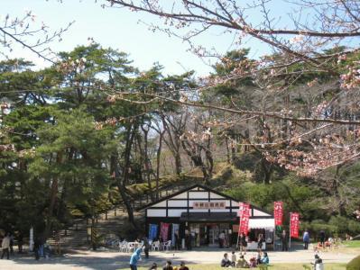 千秋公園桜まつり④