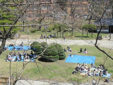 千秋公園桜まつり⑥