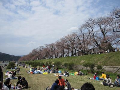 桧木内川の堤の桜 3