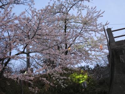 本荘公園13