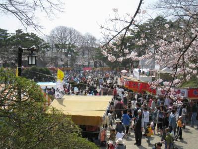 千秋公園の桜②