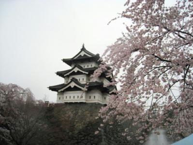 弘前の桜050