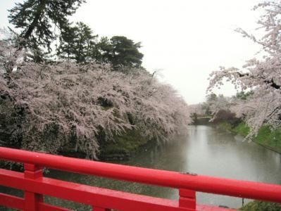 弘前の桜030