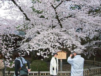 弘前の桜090