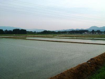 今朝の田圃の風景①