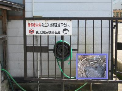 小鳥の写真  洗車機のホースホール