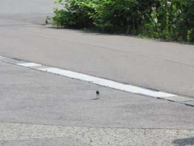 小鳥の写真  親鳥