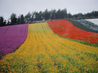 ファーム富田さん 彩りの畑
