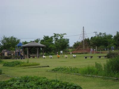千畑ラベンダー園29
