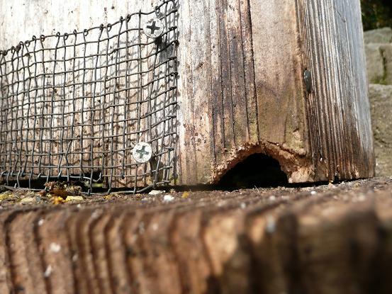 熊蜂が空けた穴3