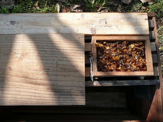 自宅の蜂08,12,4 003