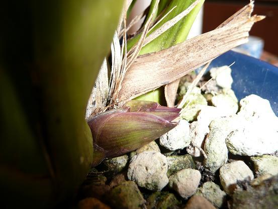 花芽が割れる4,08,12,25