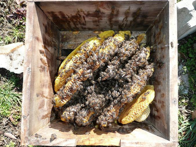 庭の蜂 09,1,28 009