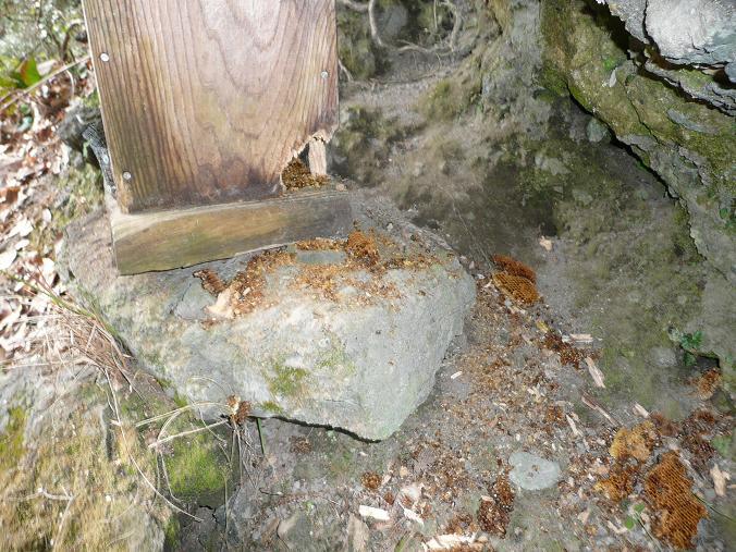 鶏淵の巣箱 09,2,11 015