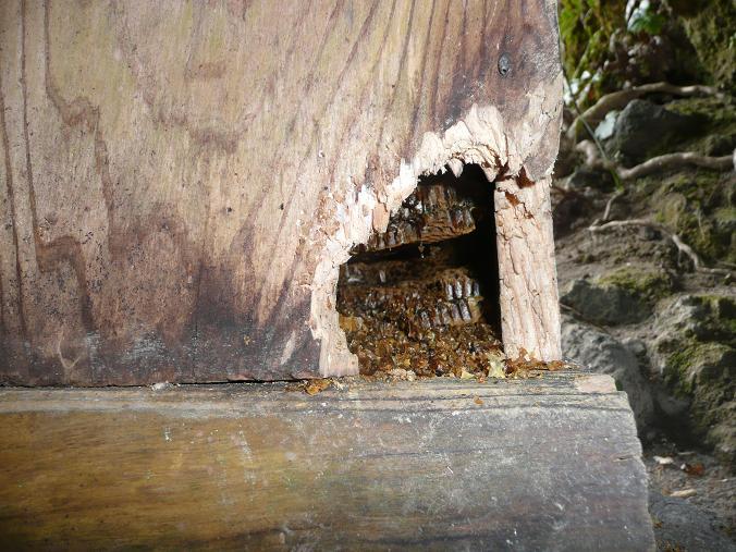 鶏淵の巣箱 09,2,11 014