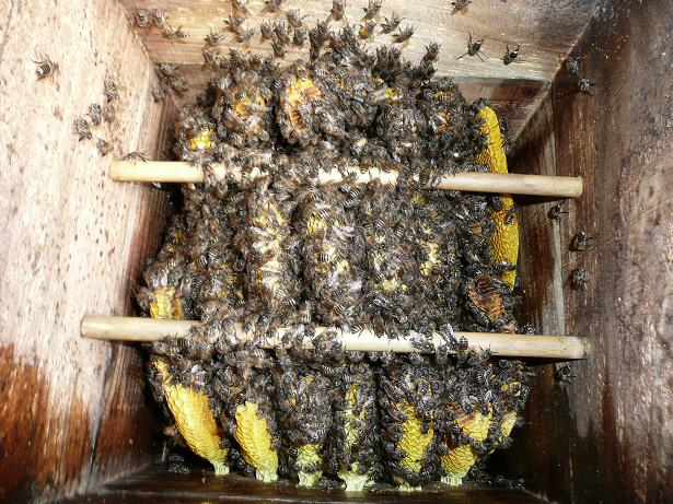 ミツバチ 09,2,23 024