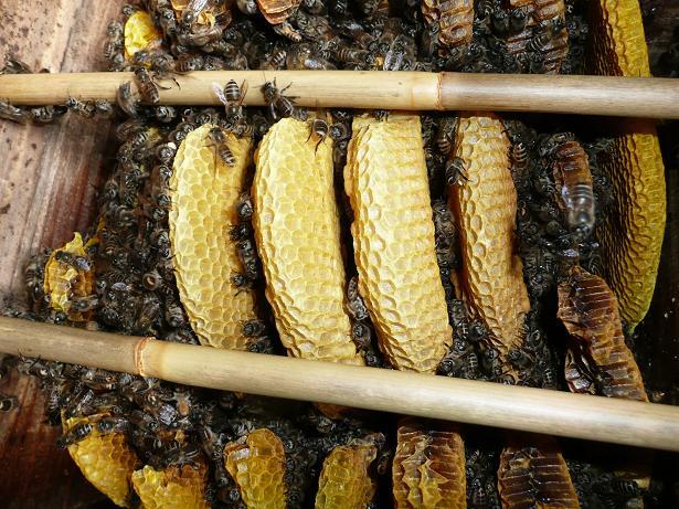 ミツバチ 09,2,23 027