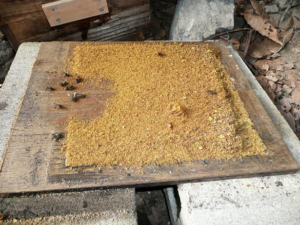 ミツバチ 09,2,23 030