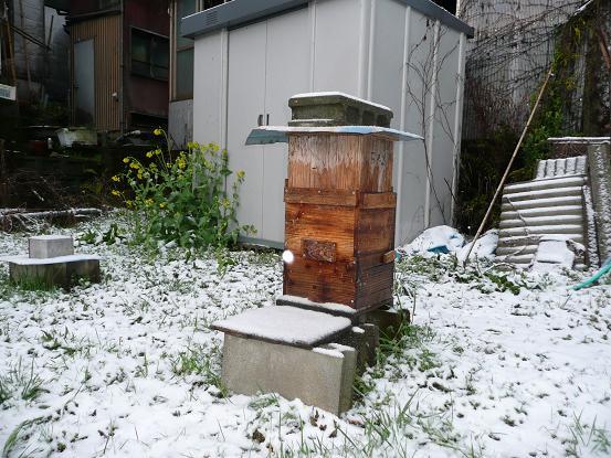 3月の雪 09,3,14 002