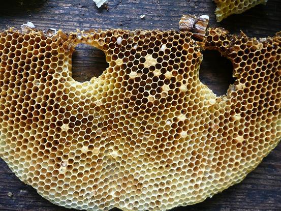 蜂子のいない巣板 09,7,15 003