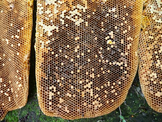 蜂子出しで採蜜 09,7,29 007