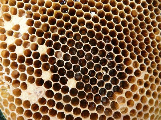 蜂子出しで採蜜 09,7,29 011