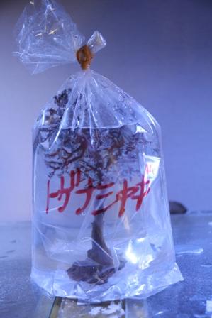 珊瑚福袋3