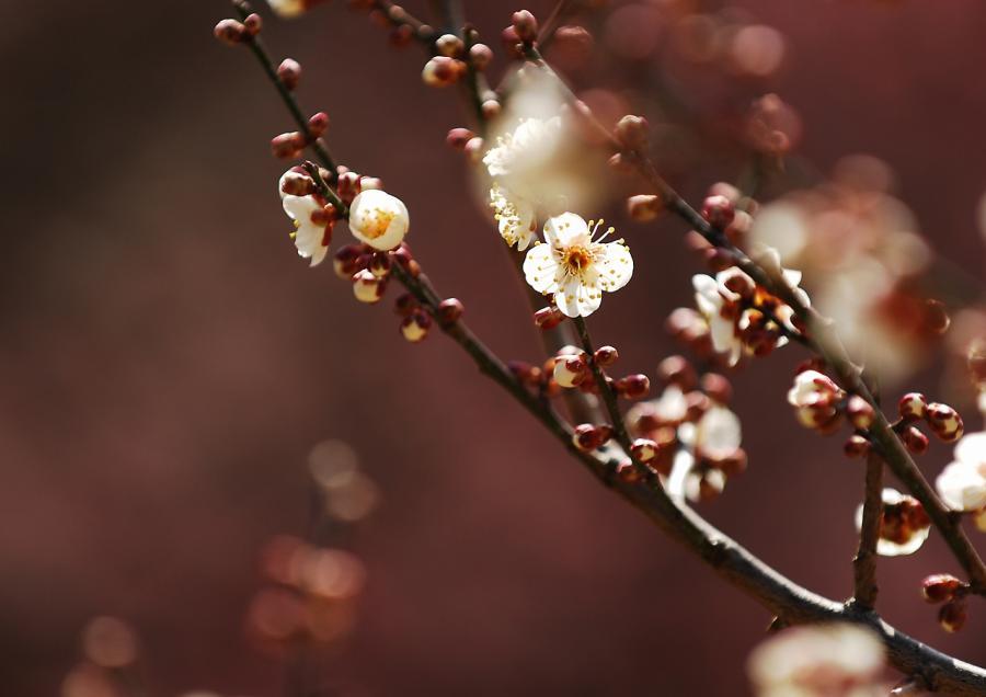 2011 02 19 梅ボカシ(47)