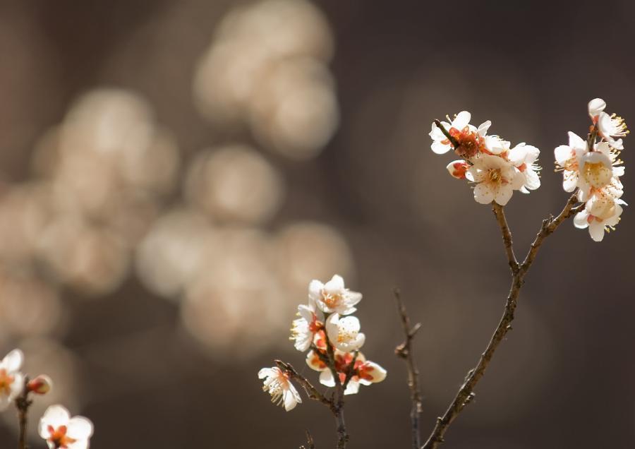 2011 02 19 梅ボカシ2 (36)
