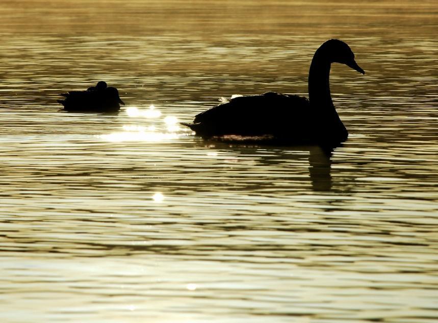 黄金の湖上2