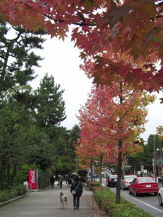 紅葉した街路樹