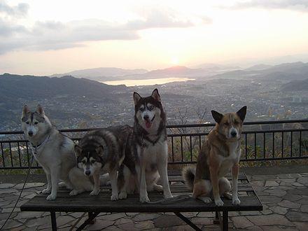 屋島山頂から見る朝日