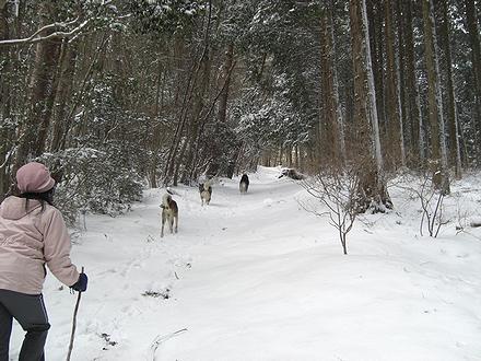 讃岐竜王山への雪道