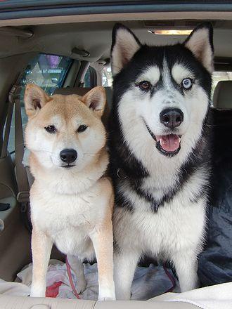 犬だ犬だ!沢山いる!