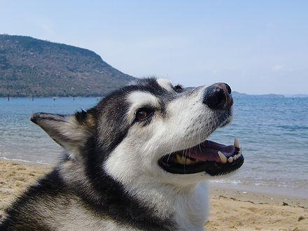 プライベートビーチですよ
