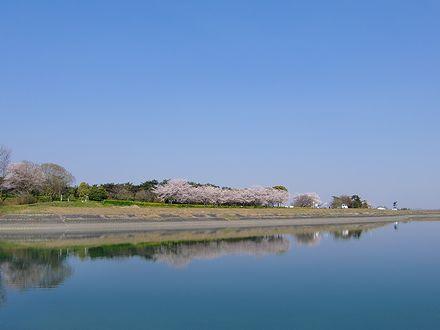 快晴と湖畔の桜