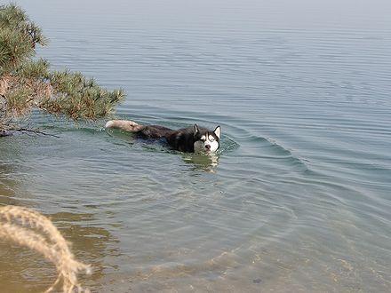 今年の初泳ぎ