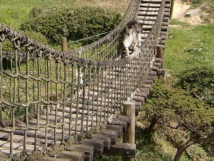 北斗の吊り橋渡り