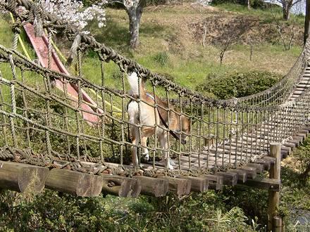ジョンの吊り橋渡り