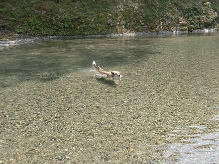 穴吹川のカッパ犬ジョン