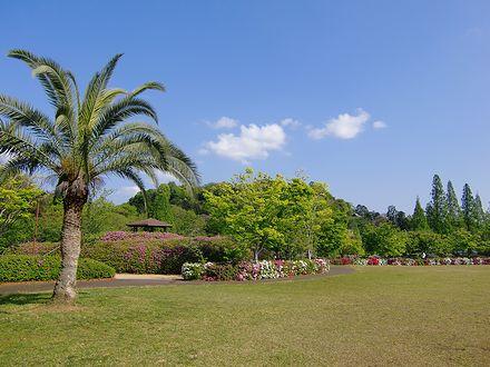 ツツジが咲く公園