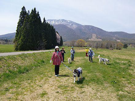 黒姫山をバックに散歩
