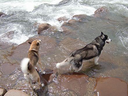 泳げないね~