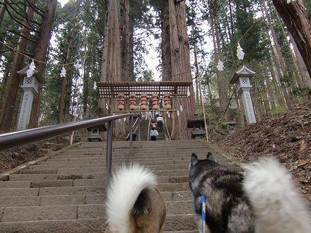 宝光社へは杉並木の階段を上ります