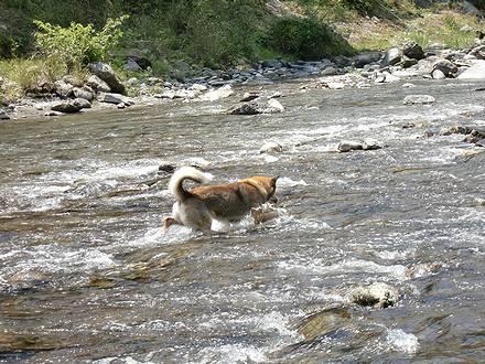 川を渡るジョン