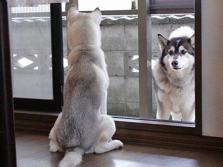 健太が入ってくるのを待つぎんちゃん