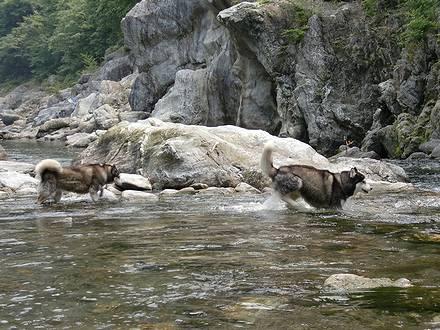 川の中を歩く健太・北斗