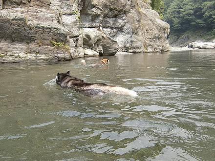 下流へ泳ぐジョンと北斗